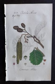 Sowerby C1805 Hand Col Botanical Print. Common Alder 1508